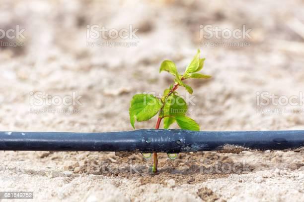 Photo of Drip irrigation system