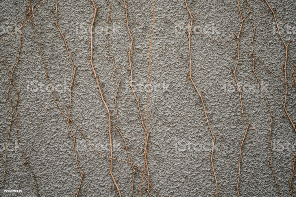 Drive ivy one the wand royalty-free stock photo