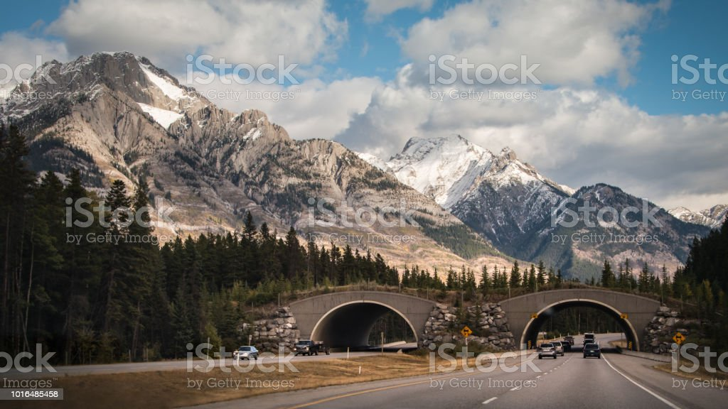 Drive through wildlife overpass in Banff National Park, Canadian Rockies stock photo