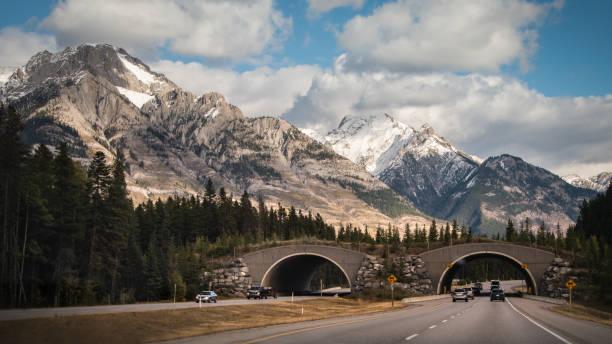 Dirija pelo viaduto da vida selvagem no Parque Nacional de Banff, montanhas rochosas canadenses - foto de acervo