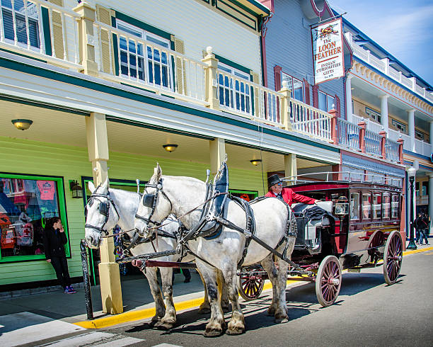 driver of a vintage horse drawn carriage waits for passengers - mackinac island stock photos and pictures