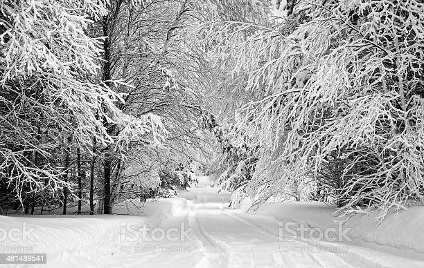 Photo of Driveway and Snow Coated Trees Monochrome Horizontal