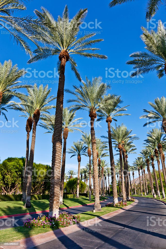 Driveway in Palm Springs stock photo