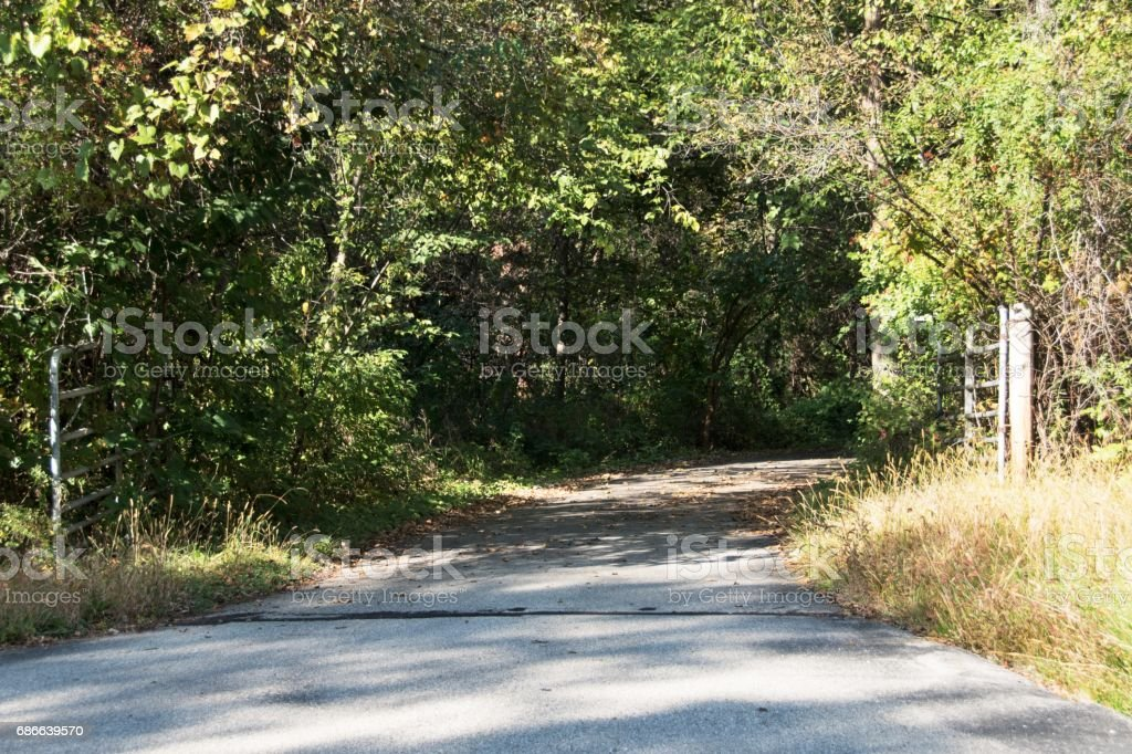 Driveway into the Woods royalty-free stock photo