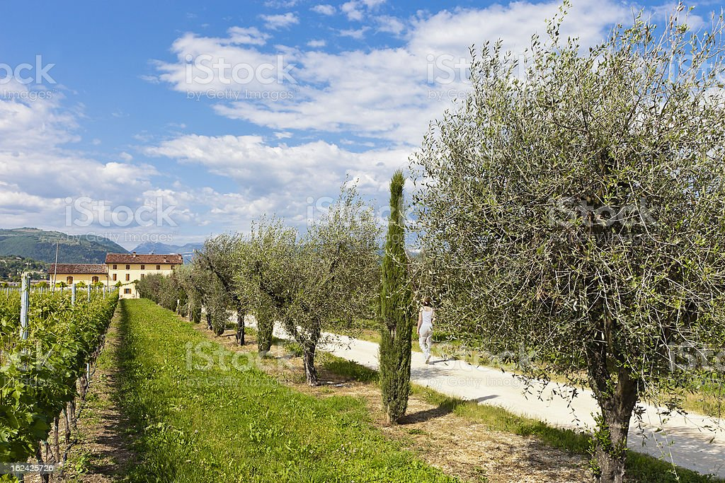 Driveway To The Farmhouse, Valpolicella royalty-free stock photo