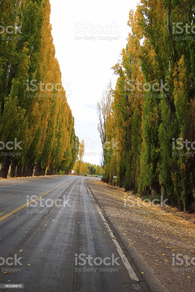 Driving by Uspallata (Argentine, Andes) - Tall Poplar Trees royalty-free stock photo