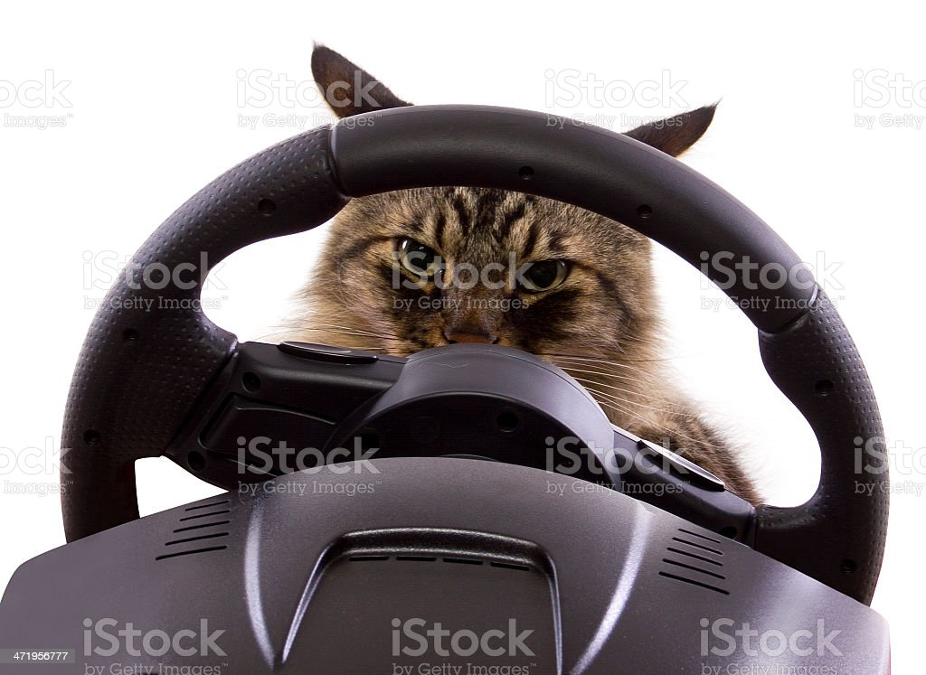 Driving Cat Behind the Steeing Wheel on White Background stock photo