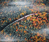 Aerial view on red car driving through idyllic mixed forest in autumn colours.
