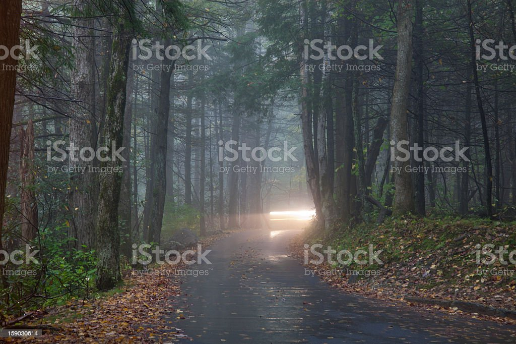 Driving in fog royalty-free stock photo