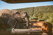 Off-Road vehicle at safari in South Africa.