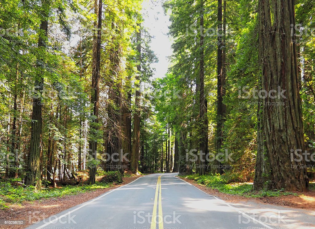 Driving Roadtrip through Lush, Green Redwood Forest stock photo