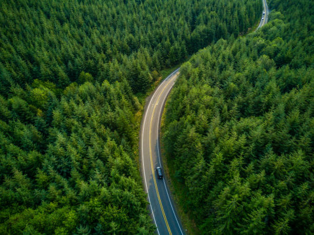 Driving Through Forest - Aerial View Aerial view of a road winding through managed evergreen forest in Grays harbor County, Washington, USA. washington state stock pictures, royalty-free photos & images