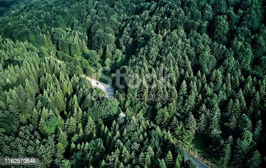888361900 istock photo Driving Through Forest 1162570546