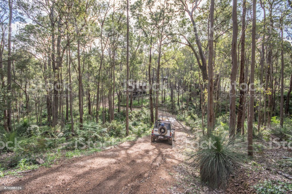 Driving Through Jarrahdale Forest stock photo