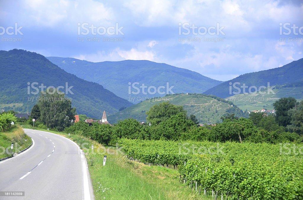 Driving through vineyards of the Wachau Valley, Austria. royalty-free stock photo