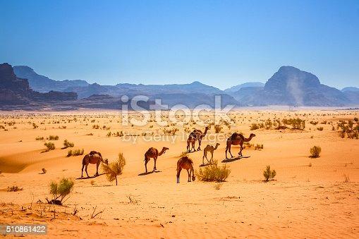 Photo of a small herd of dromedary camels in the Wadi Rum desert in Jordan.