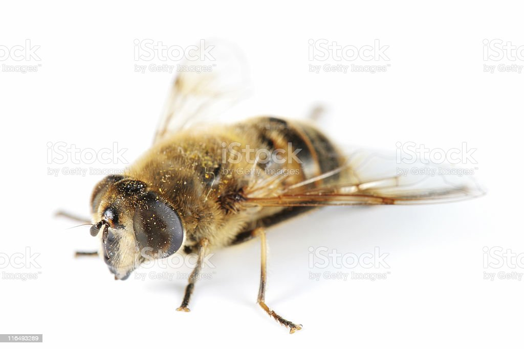 Drone fly stock photo