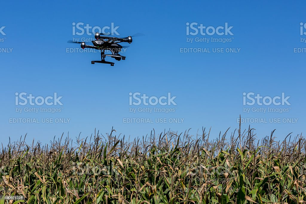 Drone Flying Over a Corn Field stock photo