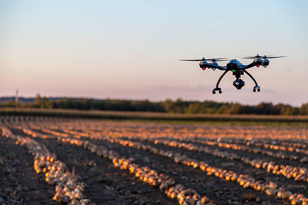drone flying over an onions field at sunset - drones stock photos and pictures