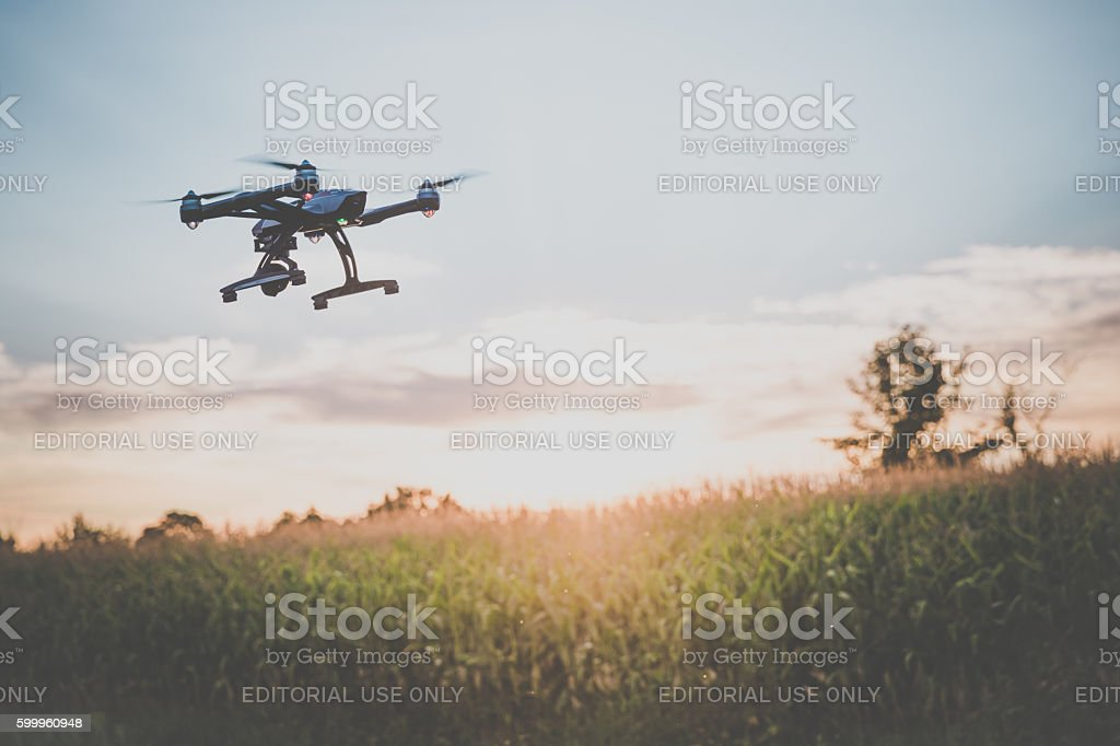Drone Flying Over an Onions Field At Sunset stock photo