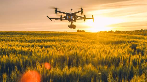 일몰에 필드 위에 비행 하는 무인 항공기 - 농업 뉴스 사진 이미지