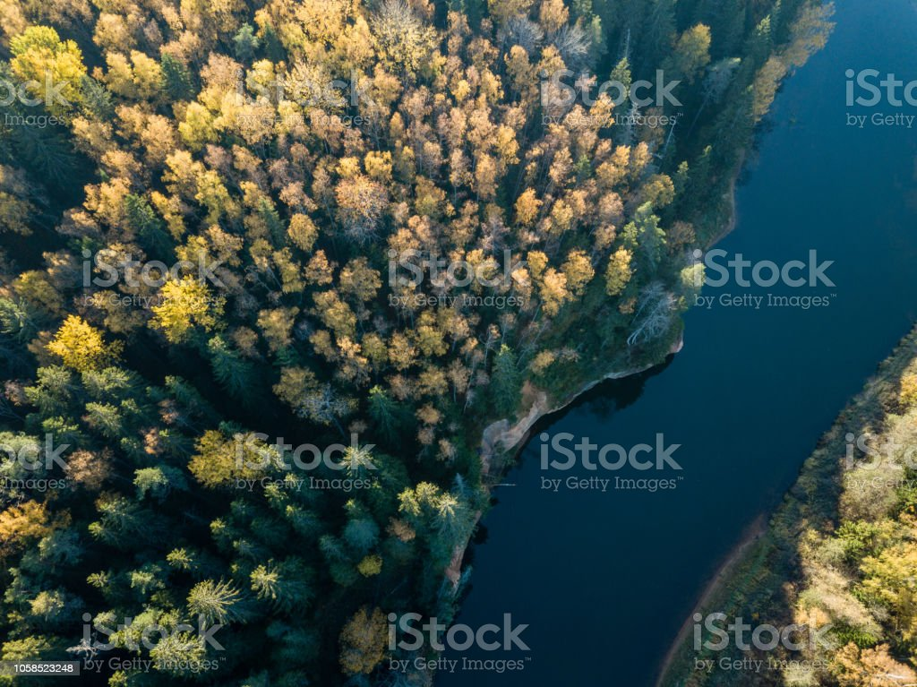 drone image. aerial view of wavy river in autumn colored forest....