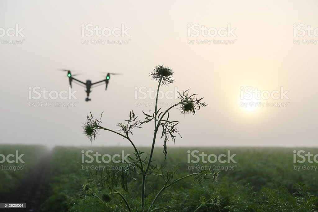 drone over plantation stock photo