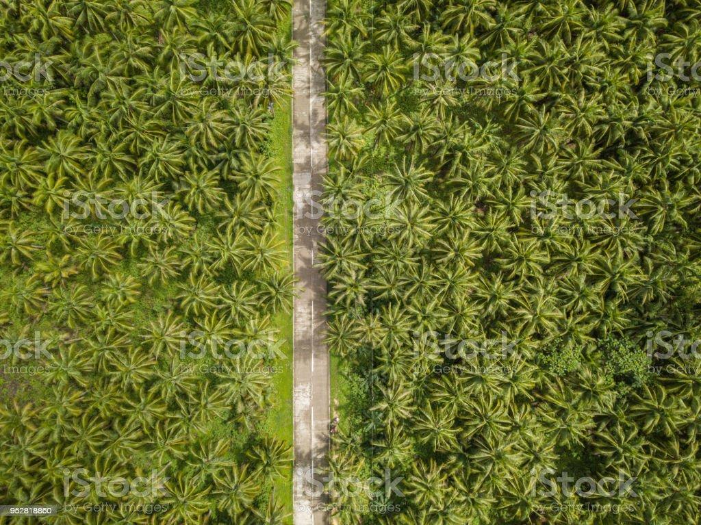 Drohne Gesichtspunkt der Palmen und Straße auf den Philippinen – Foto