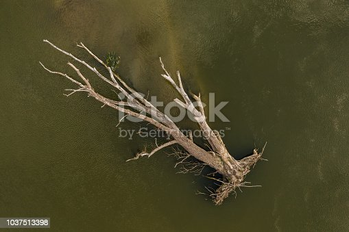 istock Drone shot directly from above of a big dead tree drifted during the summer floods  - stock image 1037513398