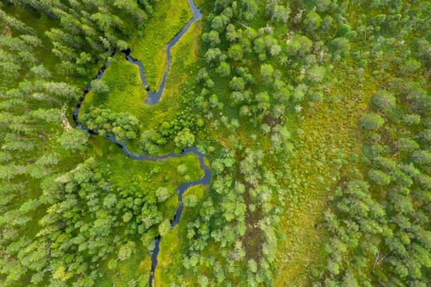 drone shot av en skog med en flod - pine forest sweden bildbanksfoton och bilder