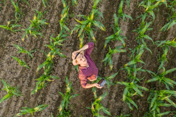 Drohnenschuss eines Landwirts im Maisfeld – Foto