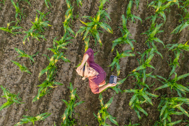 Drone shot of farmer in corn field stock photo