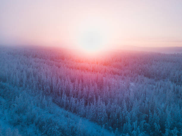 drone view at sunset on frozen forest stock photo