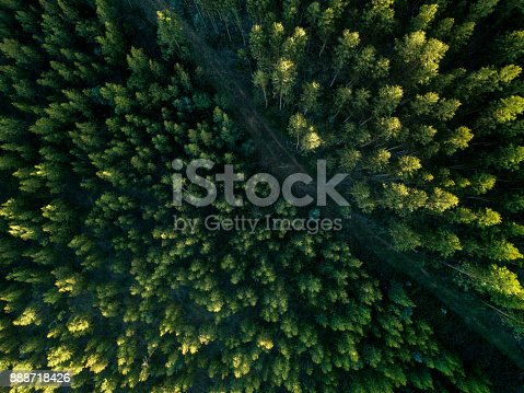 Drone View Of A path In The Forest