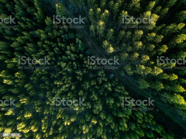 Drone view of a path in the forest picture id888718426?b=1&k=6&m=888718426&s=612x612&h=ifl779ocrshpebsfxynsctkjjzj4ssg06xe01buiv6w=