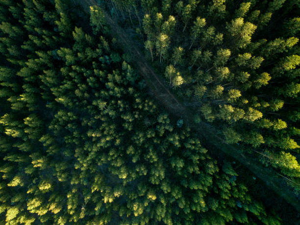 Drone View Of A path In The Forest stock photo