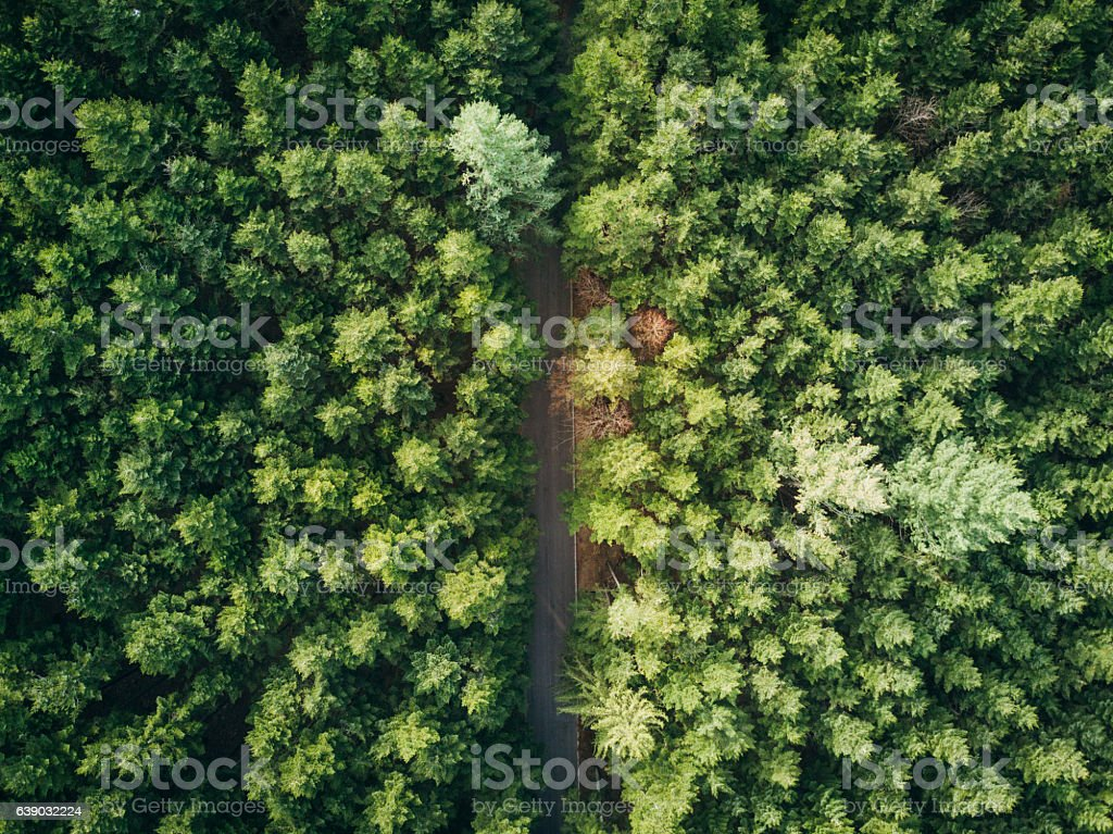 Drone View Of A Road In The Forest