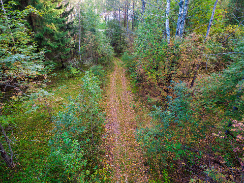 Drone view of autumn forest and country road