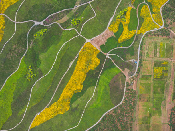 Drone View of Flowers Fields stock photo