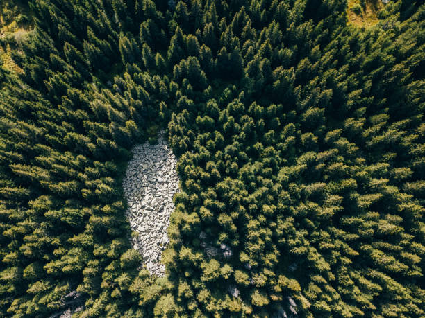 Drone view of pine forest Above view of natural parkland glade stock pictures, royalty-free photos & images