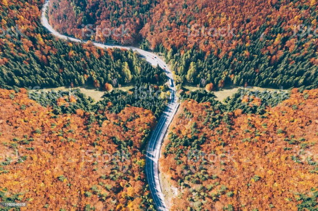 Above view of autumn forest