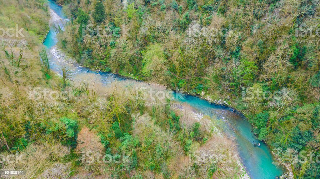 Drone view of Yew and Box-tree Grove, Sochi, Russia royalty-free stock photo