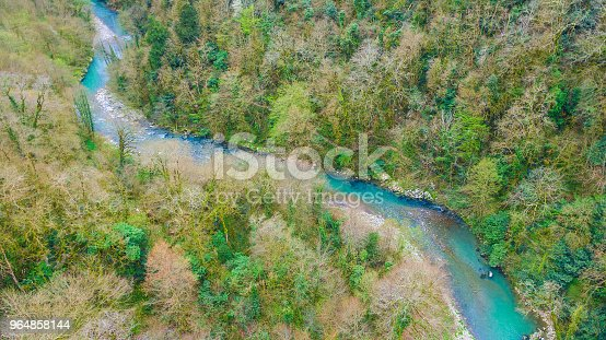 Drone View Of Yew And Boxtree Grove Sochi Russia Stock Photo & More Pictures of Aerial View