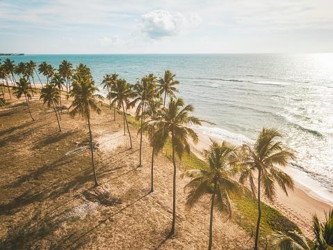 istock Drone view on coastline with Palm beach in Bahia, Brazil 1091848596