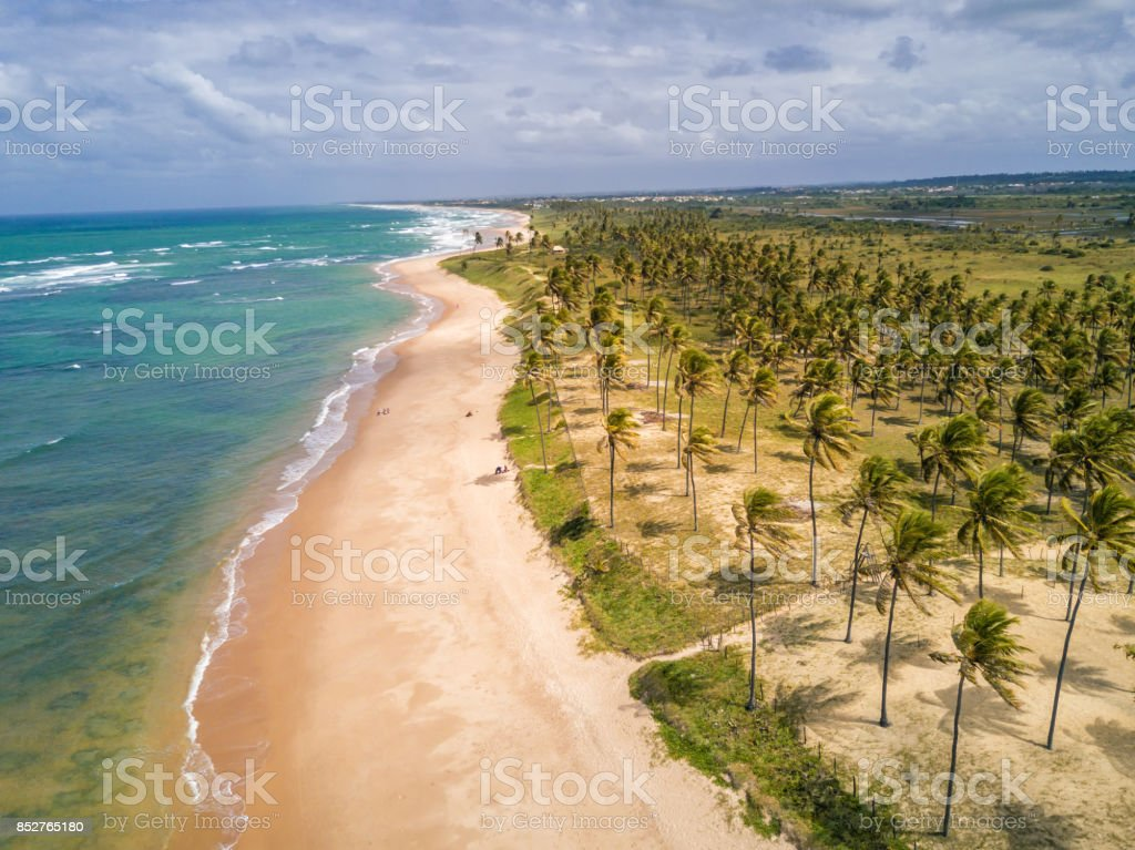 drone view on coastline with Palm beach in Bahia, Brazil stock photo
