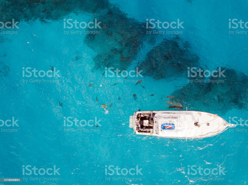 Drone view on sharks at the Bahamas stock photo
