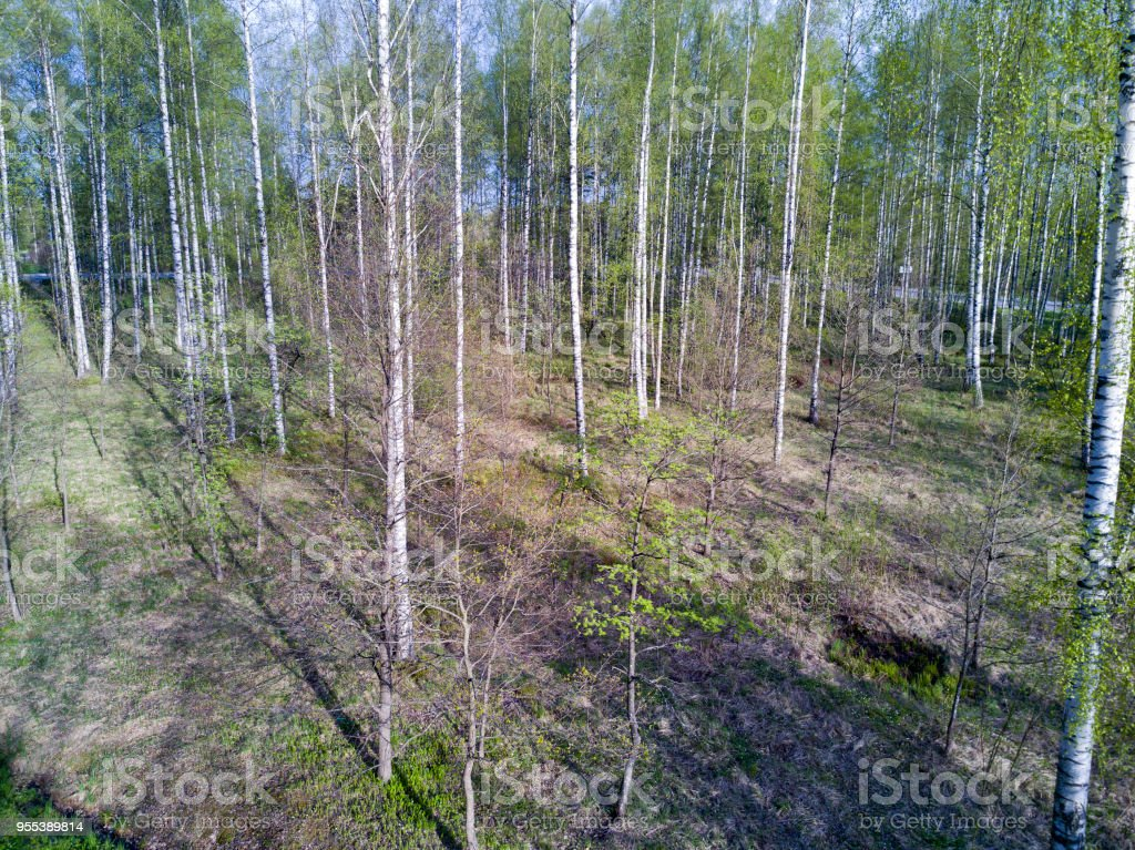 drone view on the deciduous wood at the beginning of spring with the first foliage - Zbiór zdjęć royalty-free (Bez ludzi)