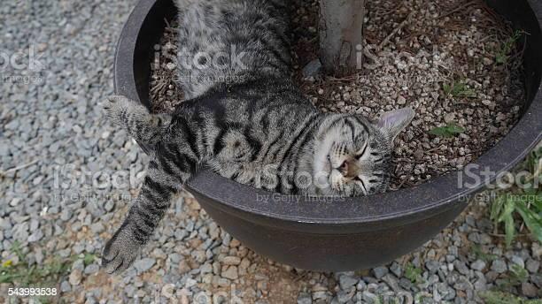 Droop cat picture id543993538?b=1&k=6&m=543993538&s=612x612&h=3vfk3i8c8kyx9bcb0s5u8dvhvcthi10cnyiktyvmffu=