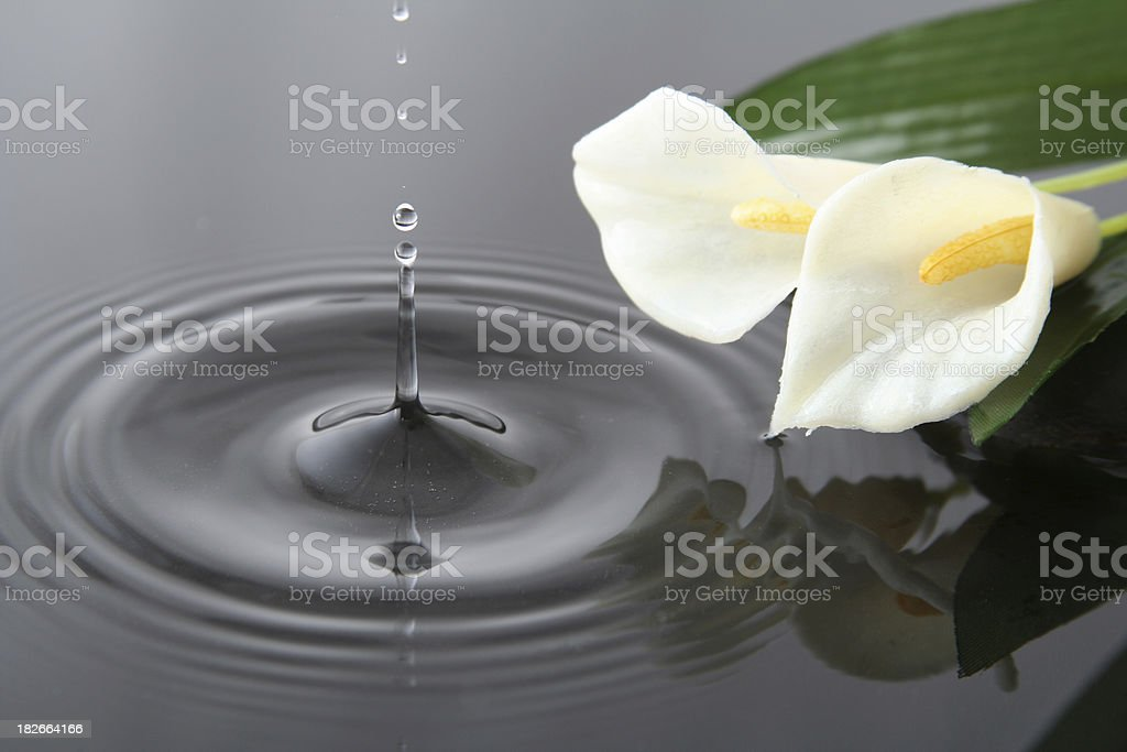 Drop and flowers stock photo