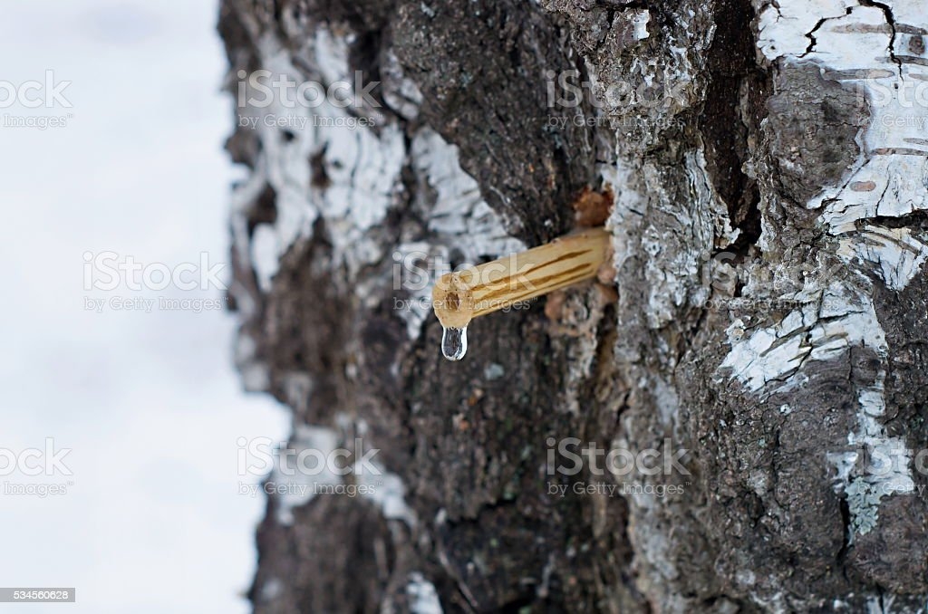 drop of birch sap stock photo